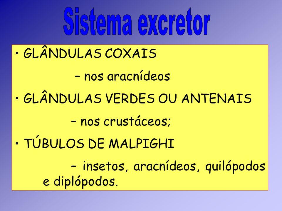 Sistema excretor GLÂNDULAS COXAIS – nos aracnídeos