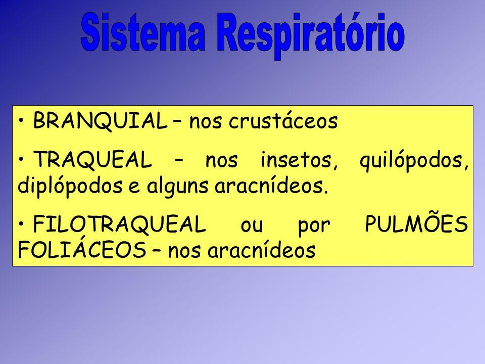 Sistema Respiratório BRANQUIAL – nos crustáceos