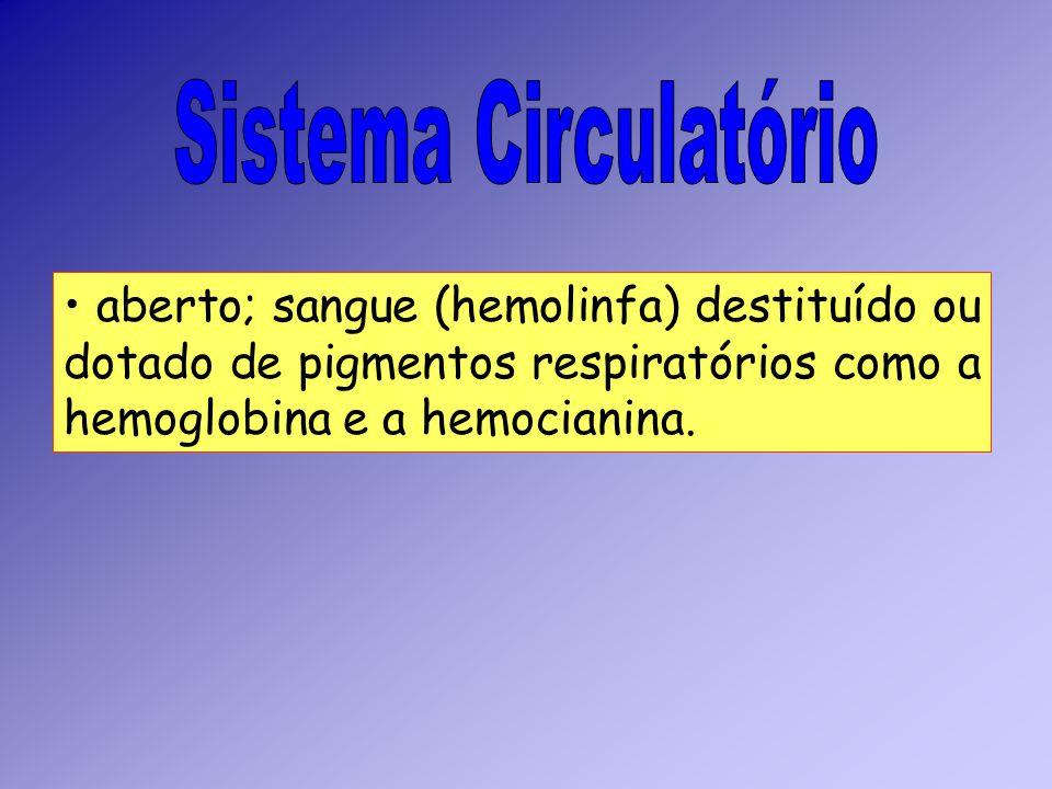 Sistema Circulatório aberto; sangue (hemolinfa) destituído ou dotado de pigmentos respiratórios como a hemoglobina e a hemocianina.