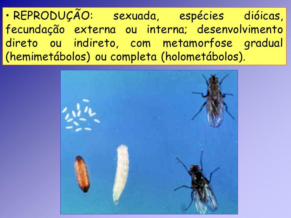 REPRODUÇÃO: sexuada, espécies dióicas, fecundação externa ou interna; desenvolvimento direto ou indireto, com metamorfose gradual (hemimetábolos) ou completa (holometábolos).