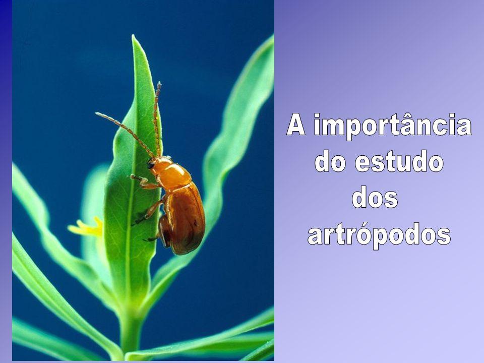 A importância do estudo dos artrópodos