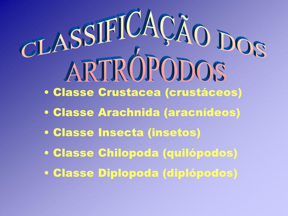 CLASSIFICAÇÃO DOS ARTRÓPODOS Classe Crustacea (crustáceos)