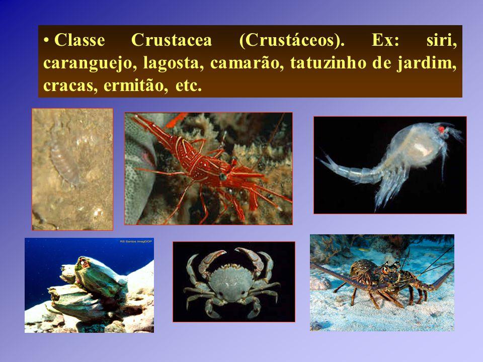 Classe Crustacea (Crustáceos)