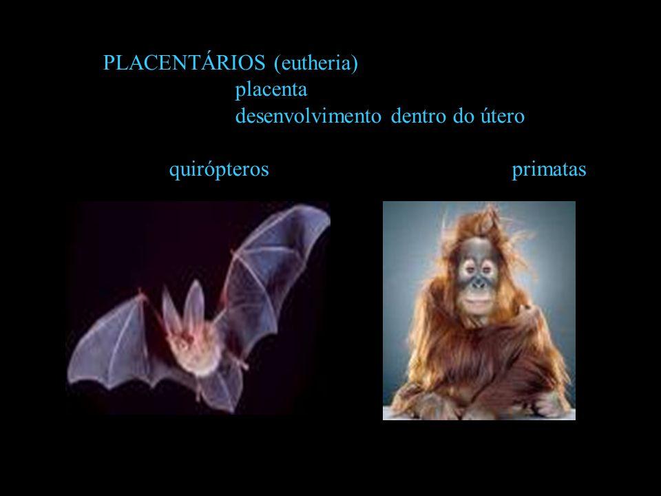 PLACENTÁRIOS (eutheria)