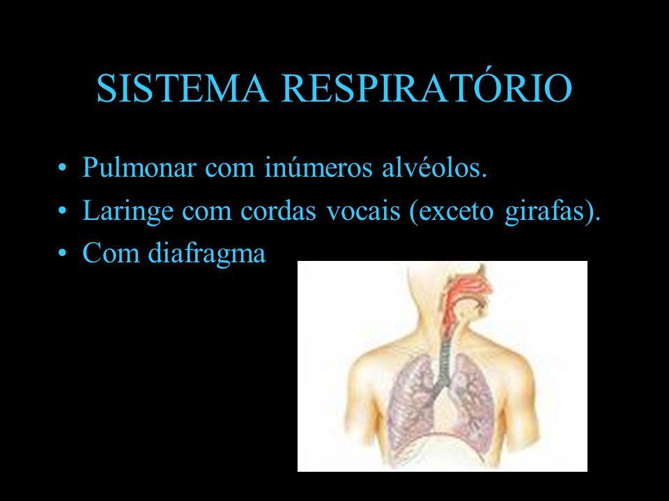 SISTEMA RESPIRATÓRIO Pulmonar com inúmeros alvéolos.