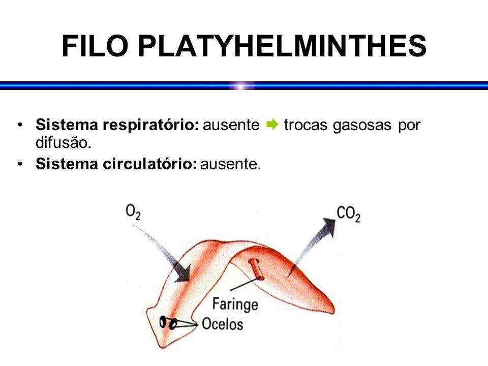 FILO PLATYHELMINTHES Sistema respiratório: ausente  trocas gasosas por difusão.