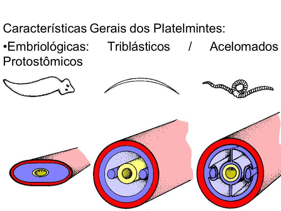 Características Gerais dos Platelmintes: