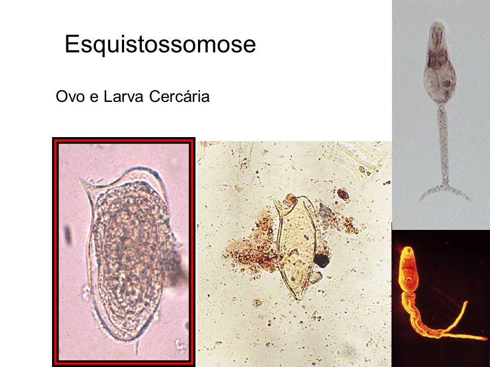 Esquistossomose Ovo e Larva Cercária