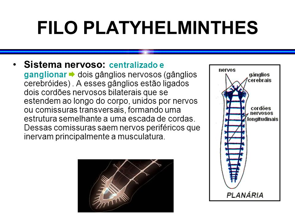 FILO PLATYHELMINTHES
