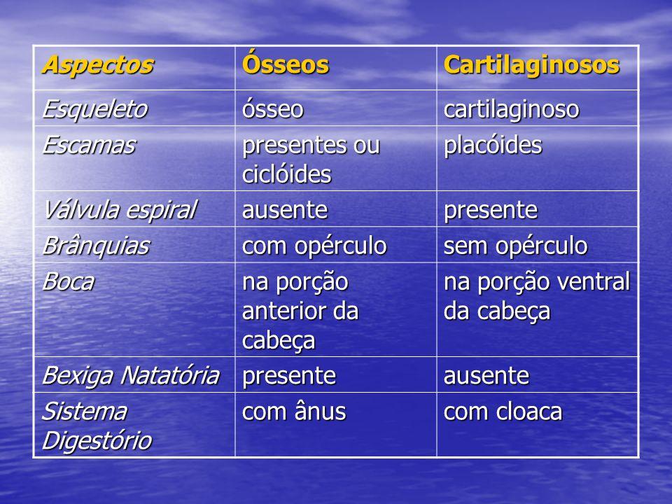 Aspectos Ósseos. Cartilaginosos. Esqueleto. ósseo. cartilaginoso. Escamas. presentes ou ciclóides.