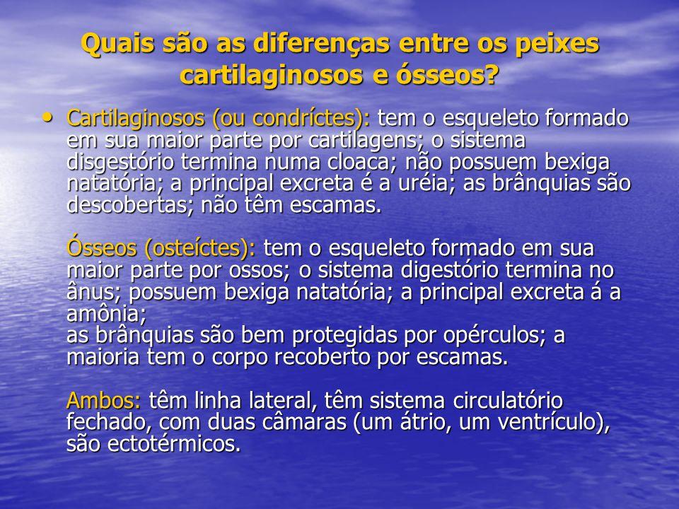 Quais são as diferenças entre os peixes cartilaginosos e ósseos