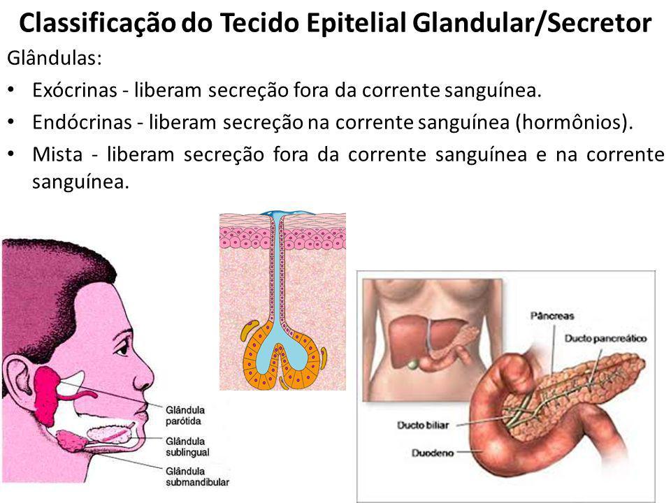 Classificação do Tecido Epitelial Glandular/Secretor