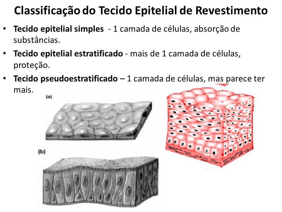 Classificação do Tecido Epitelial de Revestimento
