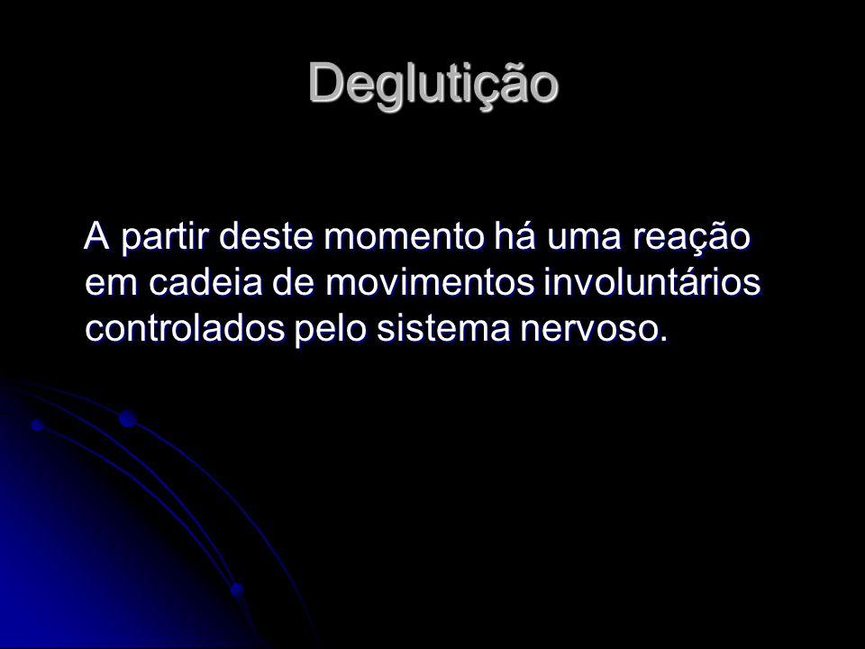 Deglutição A partir deste momento há uma reação em cadeia de movimentos involuntários controlados pelo sistema nervoso.