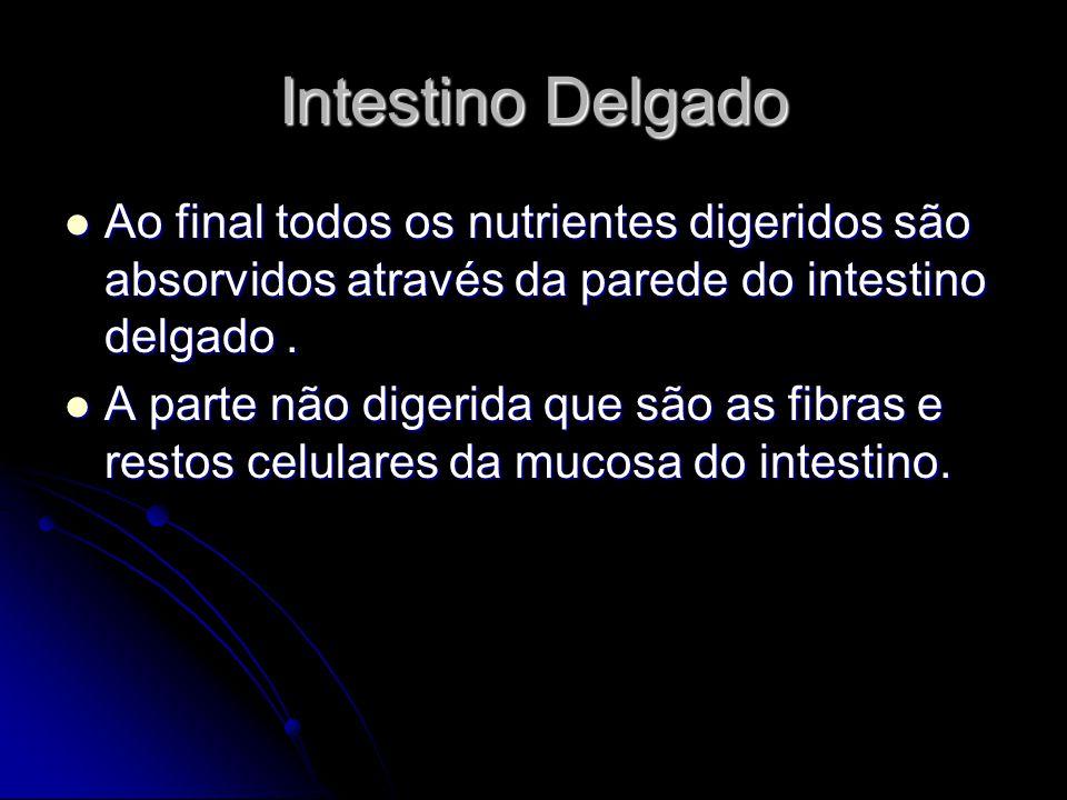 Intestino Delgado Ao final todos os nutrientes digeridos são absorvidos através da parede do intestino delgado .