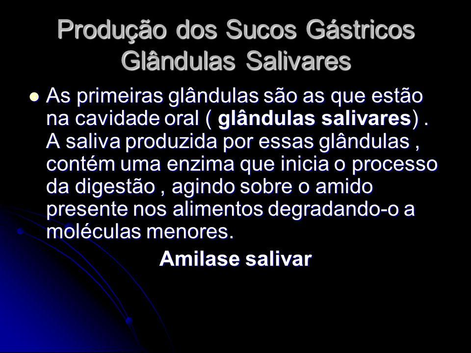 Produção dos Sucos Gástricos Glândulas Salivares