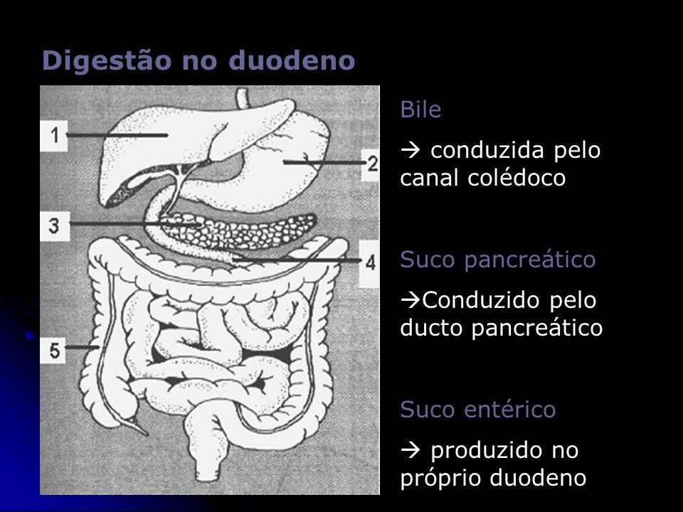 Digestão no duodeno Bile  conduzida pelo canal colédoco