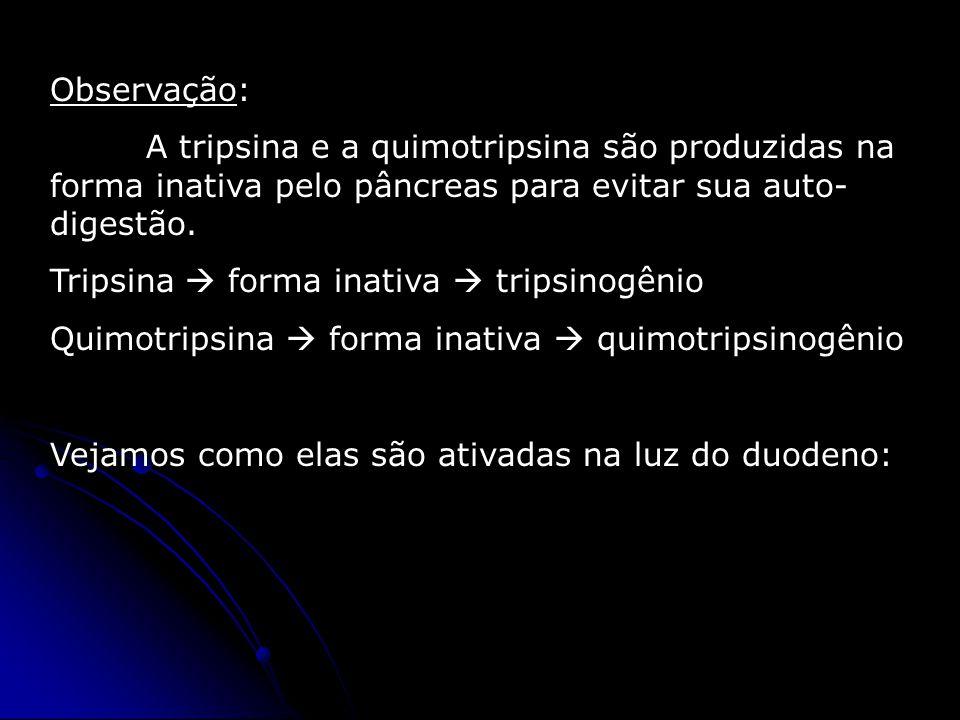 Observação: A tripsina e a quimotripsina são produzidas na forma inativa pelo pâncreas para evitar sua auto-digestão.
