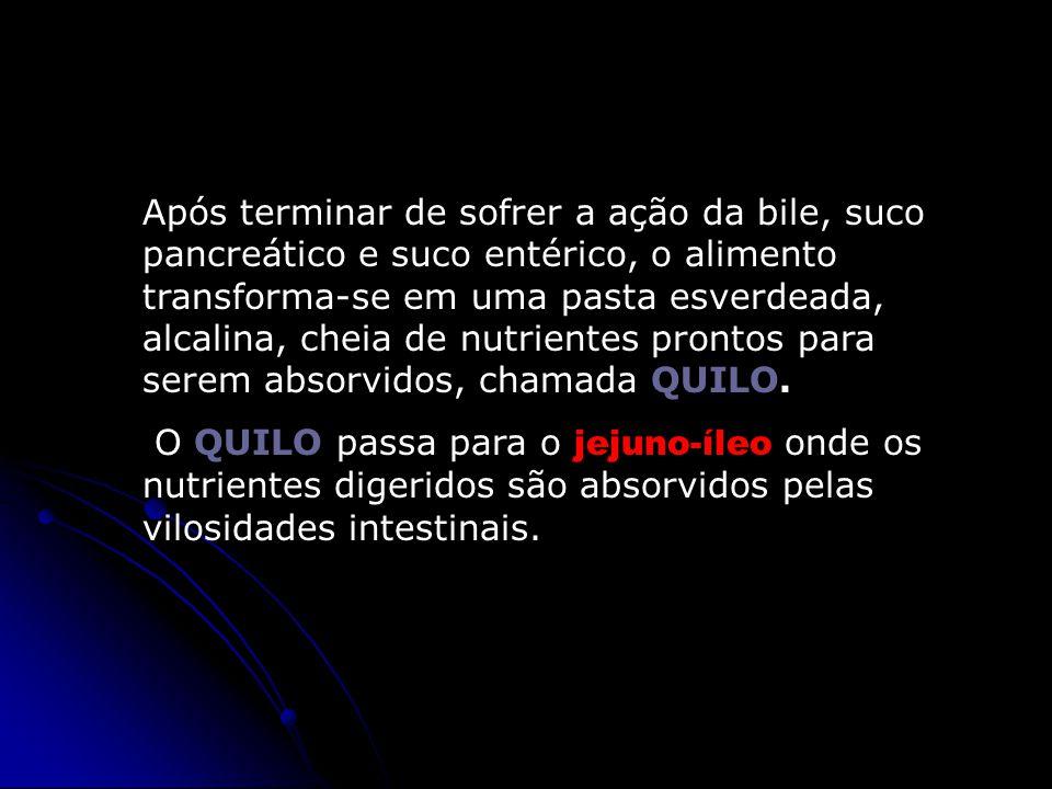 Após terminar de sofrer a ação da bile, suco pancreático e suco entérico, o alimento transforma-se em uma pasta esverdeada, alcalina, cheia de nutrientes prontos para serem absorvidos, chamada QUILO.