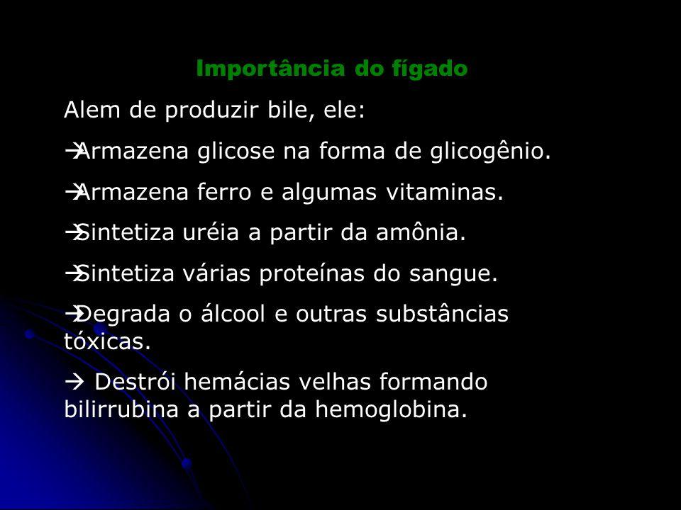 Importância do fígado Alem de produzir bile, ele: Armazena glicose na forma de glicogênio. Armazena ferro e algumas vitaminas.