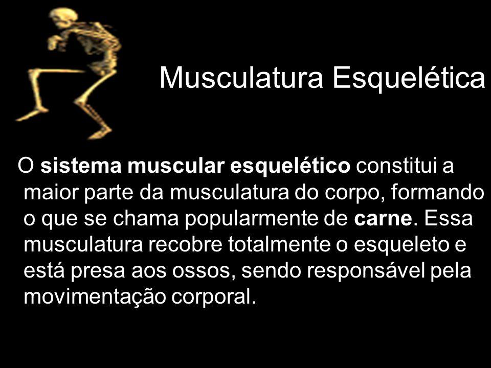 Musculatura Esquelética