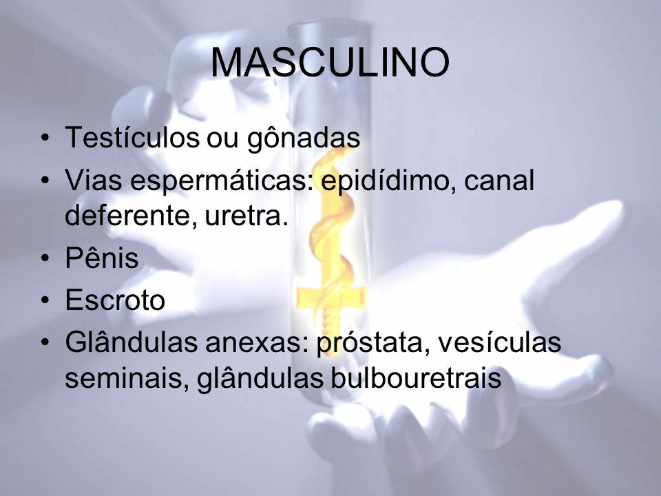 MASCULINO Testículos ou gônadas