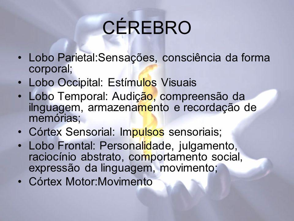 CÉREBRO Lobo Parietal:Sensações, consciência da forma corporal;