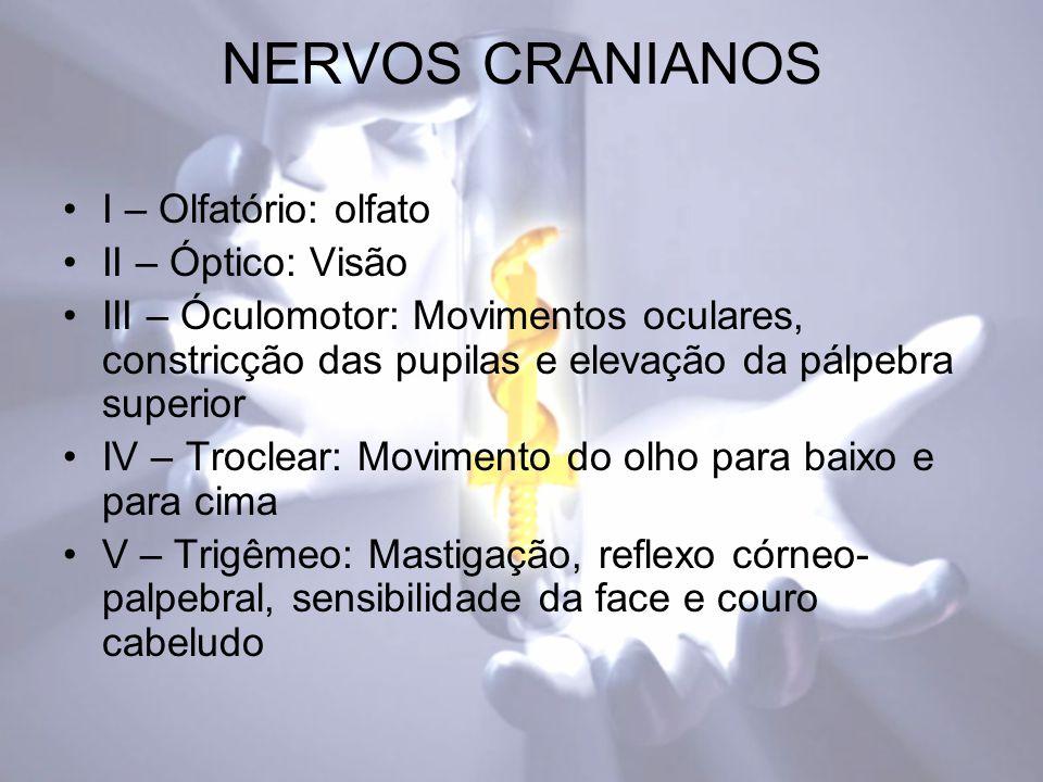 NERVOS CRANIANOS I – Olfatório: olfato II – Óptico: Visão