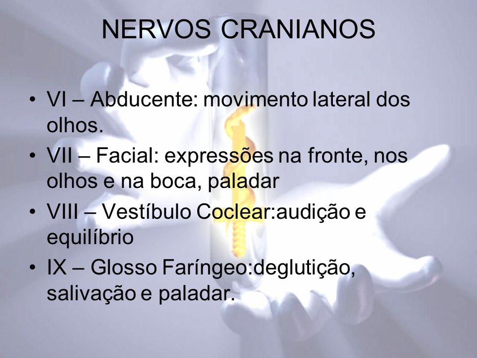 NERVOS CRANIANOS VI – Abducente: movimento lateral dos olhos.