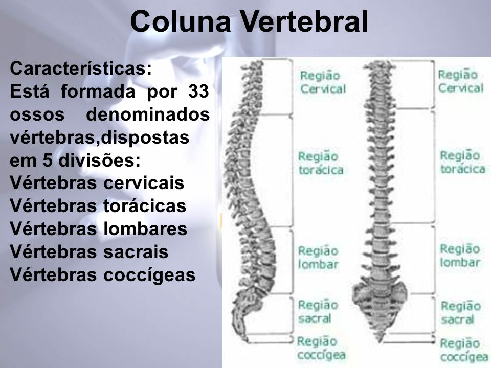Coluna Vertebral Características: