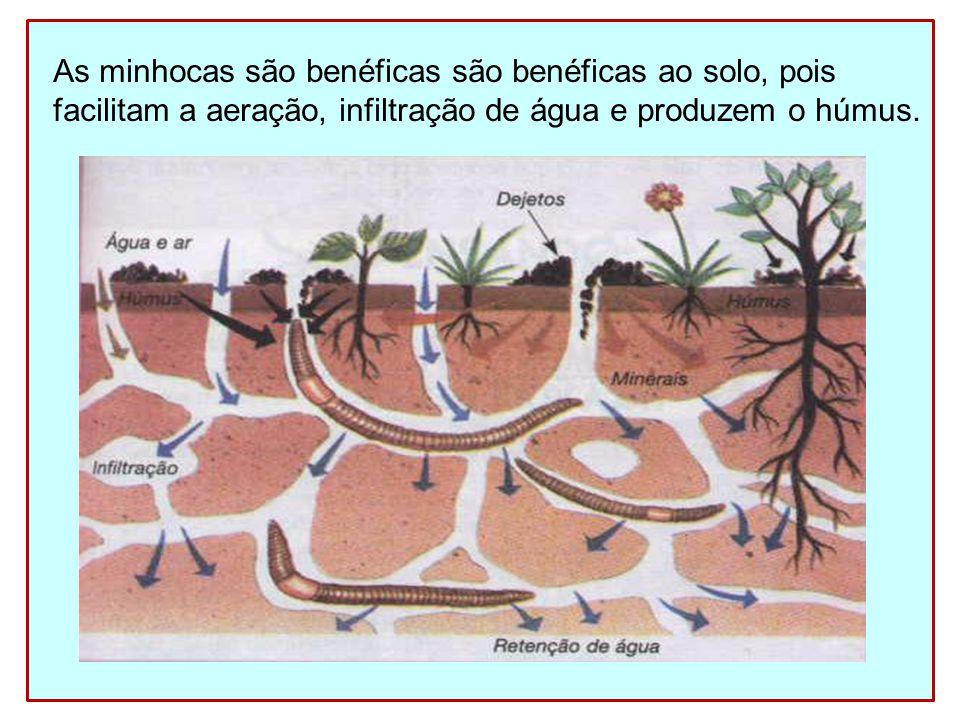 As minhocas são benéficas são benéficas ao solo, pois