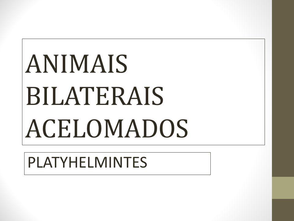 ANIMAIS BILATERAIS ACELOMADOS