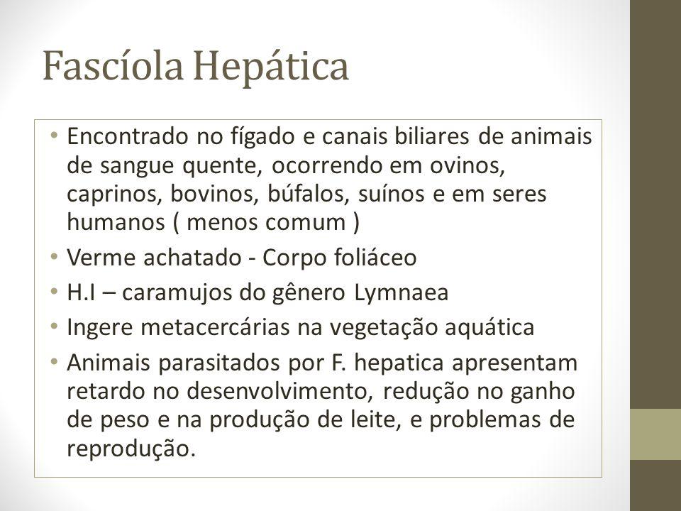 Fascíola Hepática