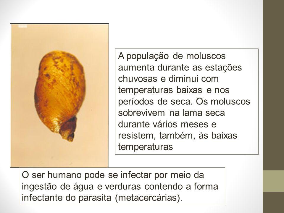 A população de moluscos aumenta durante as estações chuvosas e diminui com temperaturas baixas e nos períodos de seca. Os moluscos sobrevivem na lama seca durante vários meses e resistem, também, às baixas temperaturas