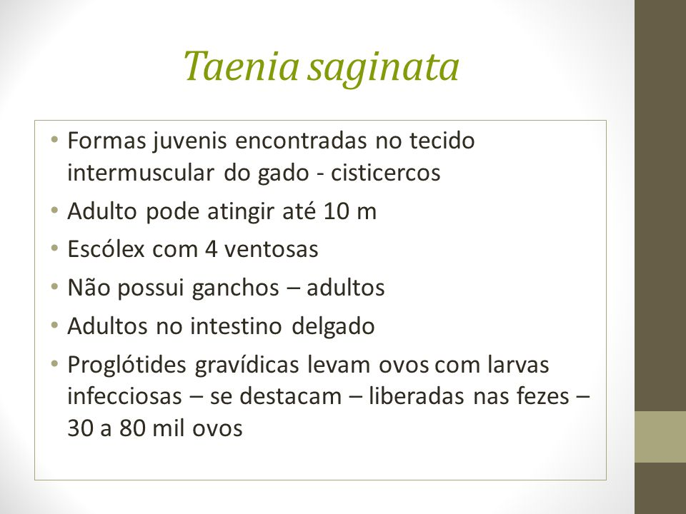 Taenia saginata Formas juvenis encontradas no tecido intermuscular do gado - cisticercos. Adulto pode atingir até 10 m.