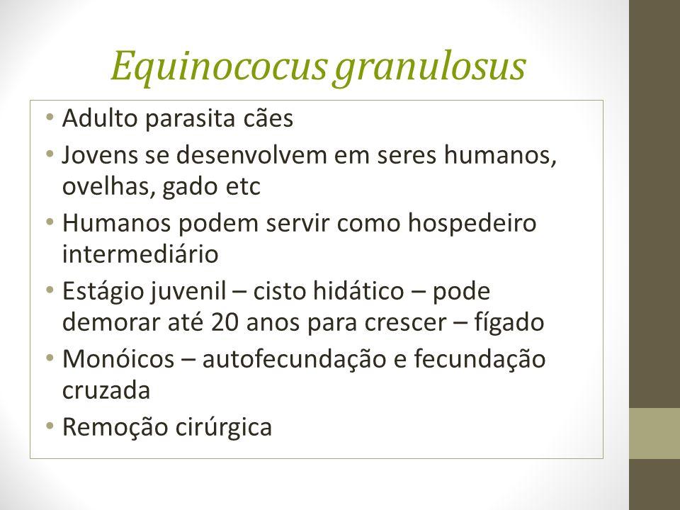 Equinococus granulosus