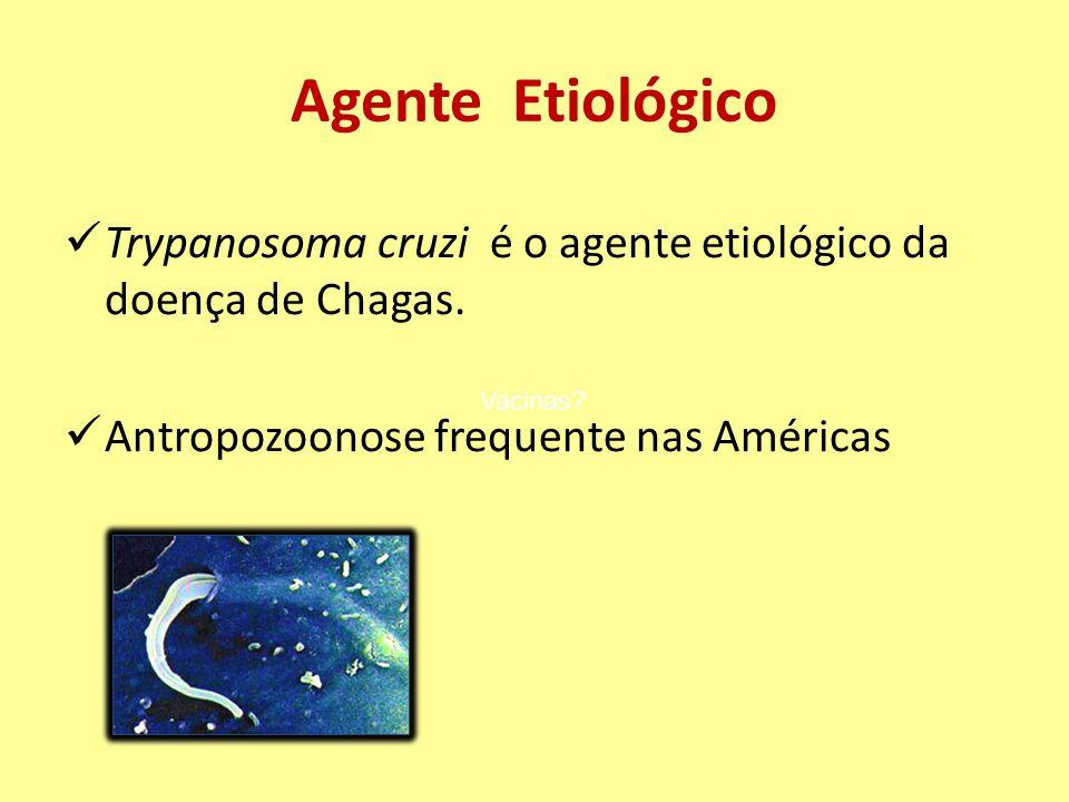 Agente Etiológico Trypanosoma cruzi é o agente etiológico da doença de Chagas. Antropozoonose frequente nas Américas.