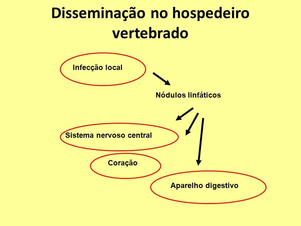 Disseminação no hospedeiro vertebrado