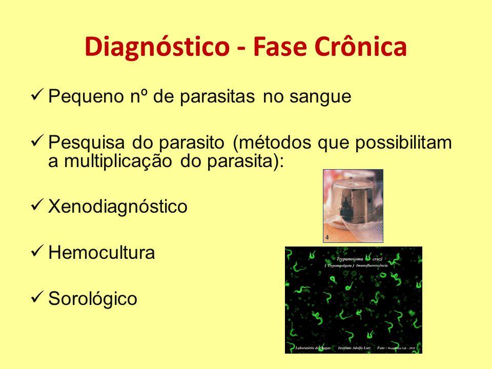 Diagnóstico - Fase Crônica