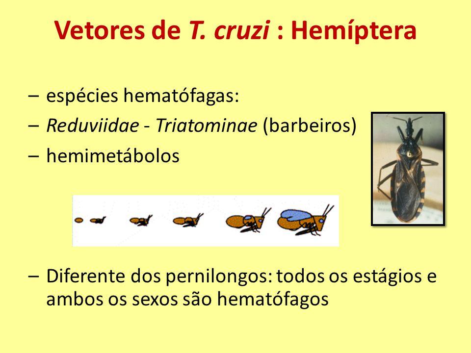 Vetores de T. cruzi : Hemíptera