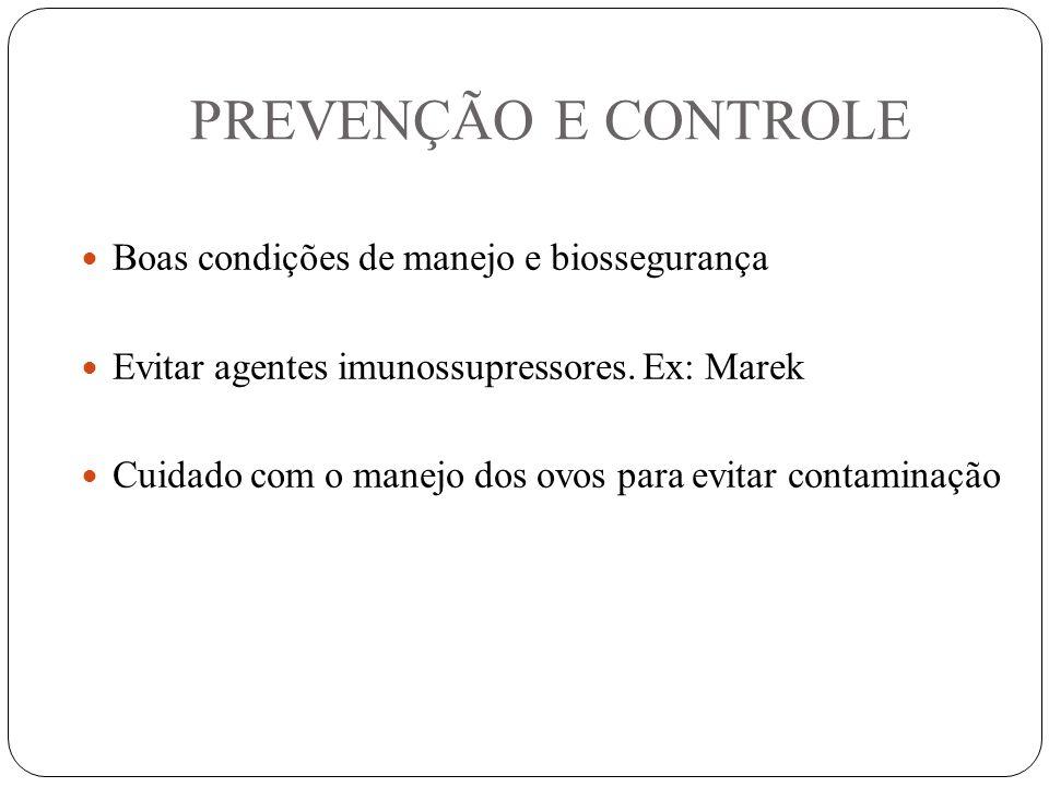 PREVENÇÃO E CONTROLE Boas condições de manejo e biossegurança