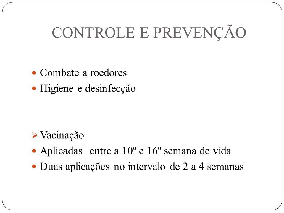 CONTROLE E PREVENÇÃO Combate a roedores Higiene e desinfecção