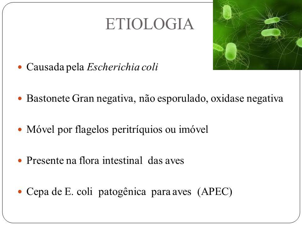 ETIOLOGIA Causada pela Escherichia coli