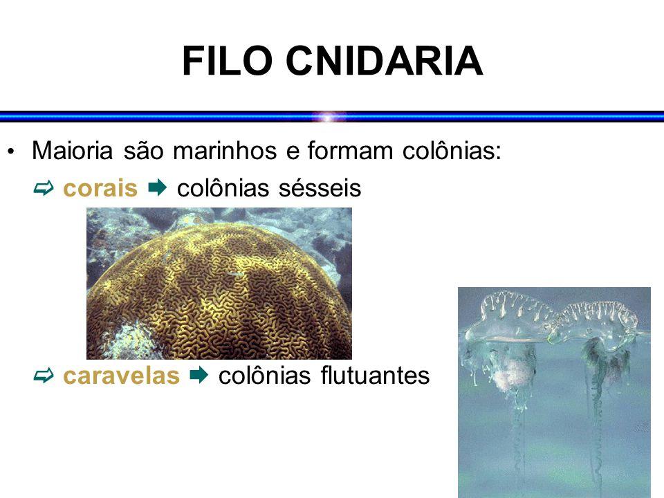 FILO CNIDARIA Maioria são marinhos e formam colônias: