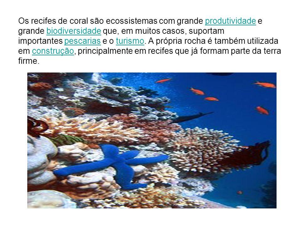 Os recifes de coral são ecossistemas com grande produtividade e grande biodiversidade que, em muitos casos, suportam importantes pescarias e o turismo.