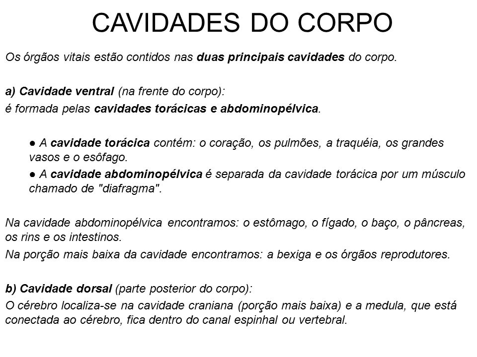 CAVIDADES DO CORPO Os órgãos vitais estão contidos nas duas principais cavidades do corpo. a) Cavidade ventral (na frente do corpo):