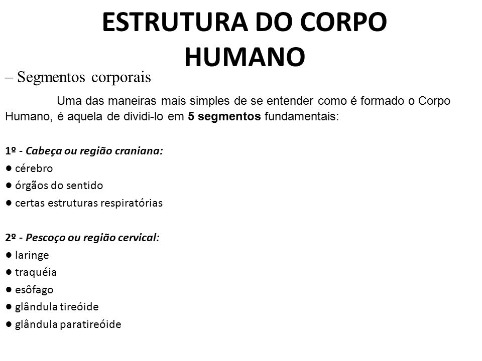 ESTRUTURA DO CORPO HUMANO