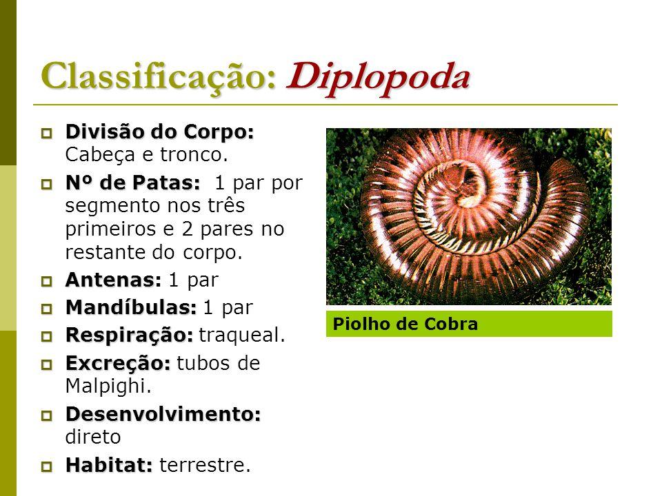 Classificação: Diplopoda