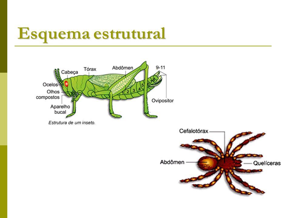 Esquema estrutural