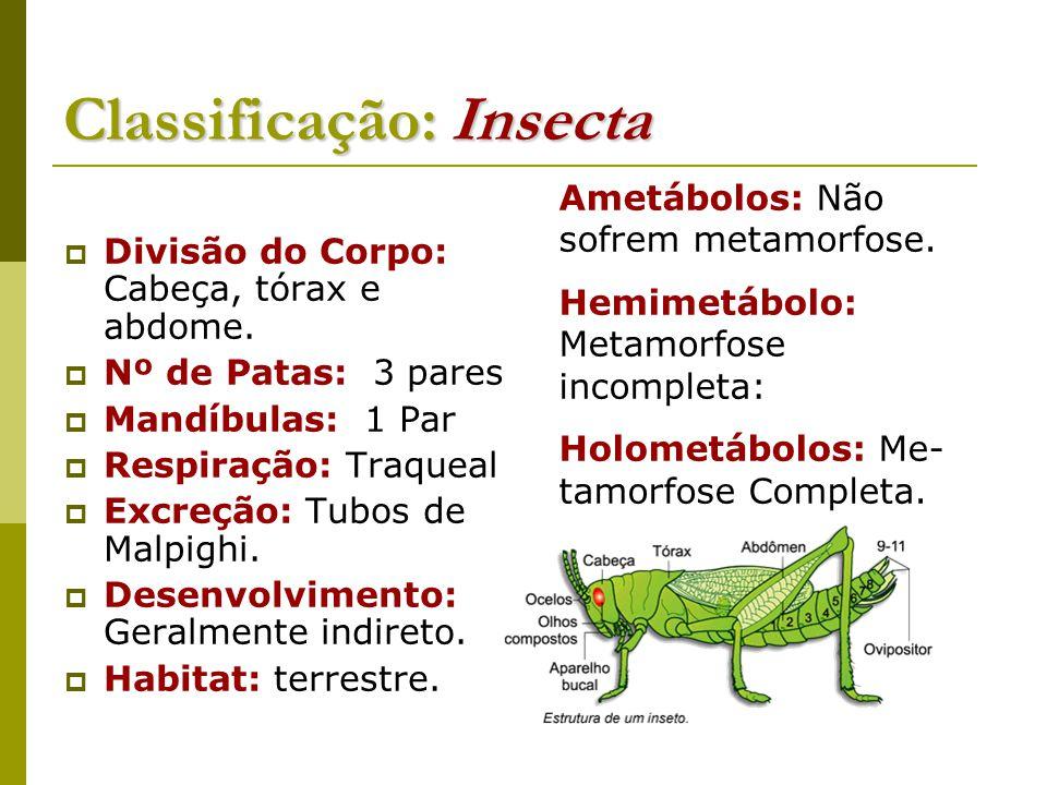 Classificação: Insecta